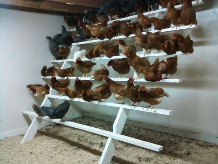 Chicken Roosting Bar