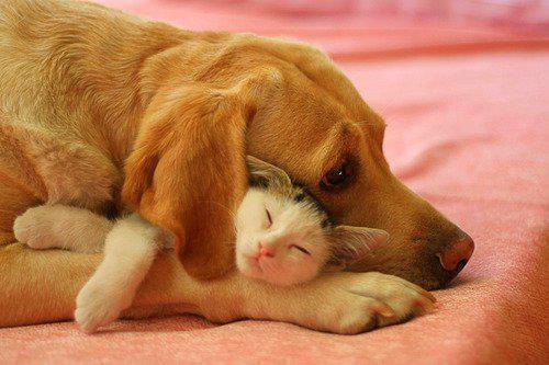 F: True Friends, Best Friends, Bestfriends, Dogs Cat, Close Friends, Pet, Cuddling Buddies, So Sweet, Sweet Dreams