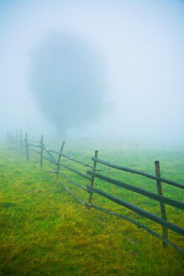 Fog. Ranch fence and tree in thick fog, haze , #Affiliate, #fence, #Ranch, #Fog, #tree,