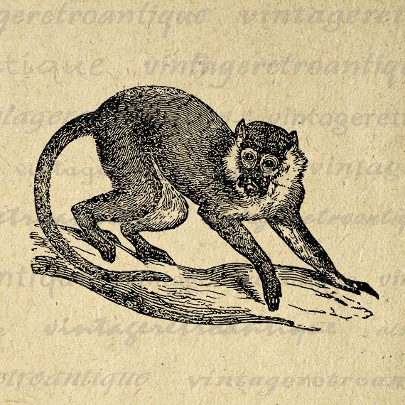 Red Monkey Digital Image Graphic Vintage Monkey Illustration