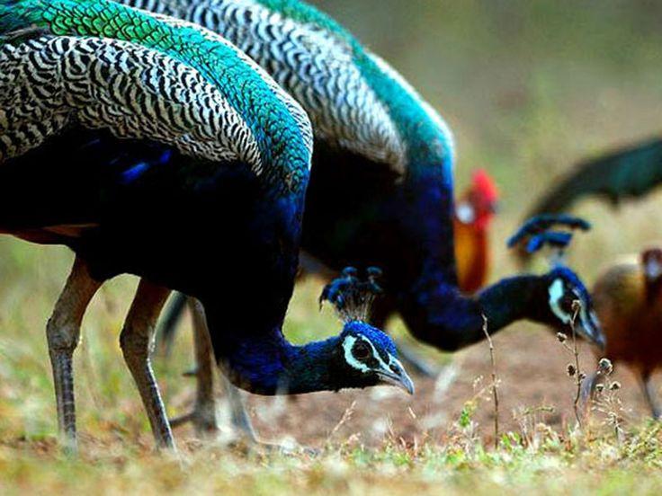 Virgin Kurschel Valleys Wildlife Sanctuary - Chhattisgarh, India