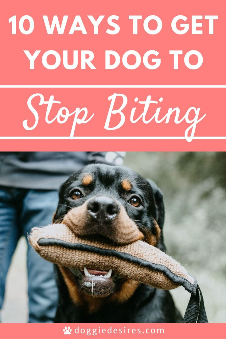 10 Ways To Get Your Dog To Stop Biting Doggie Desires in