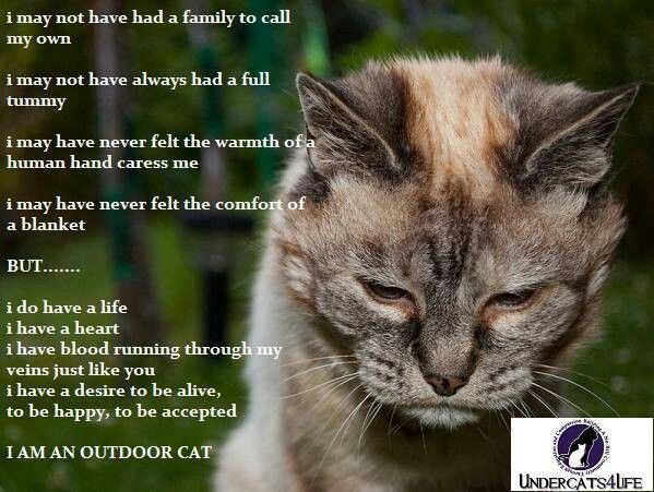 Cats Quotes 881 quotes