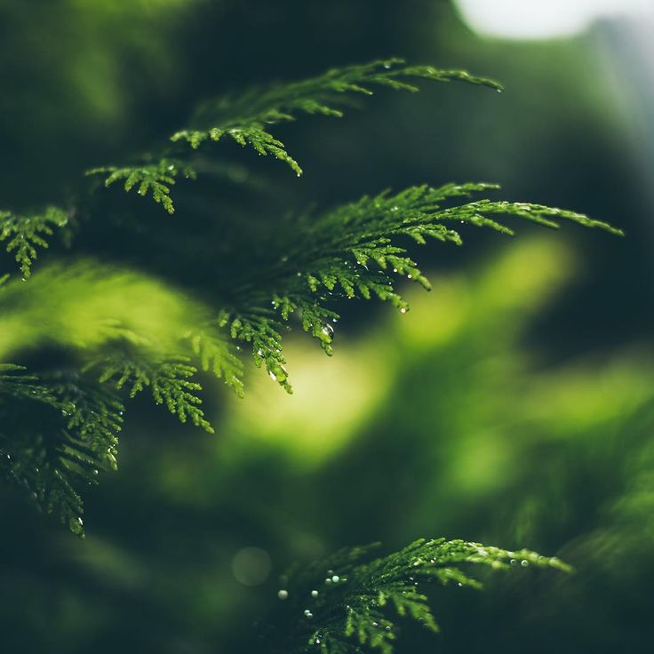 @wzzly Instagram #tree #focus #green #nature