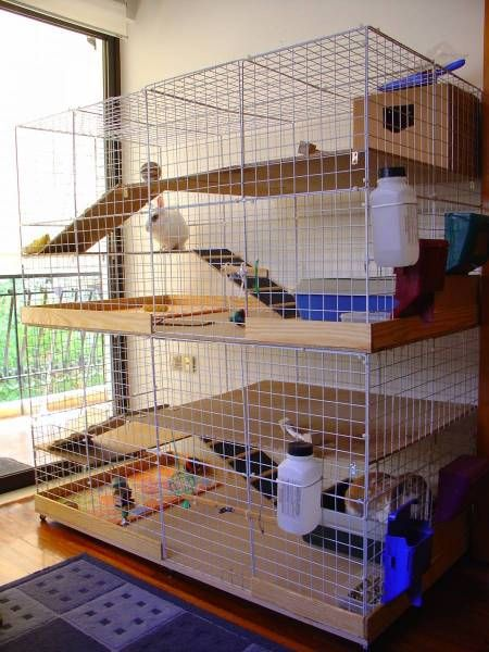 Another view of that cage I like so much! Is built for two bunnies... but with another ramp between them, it could be one huge cage! :)