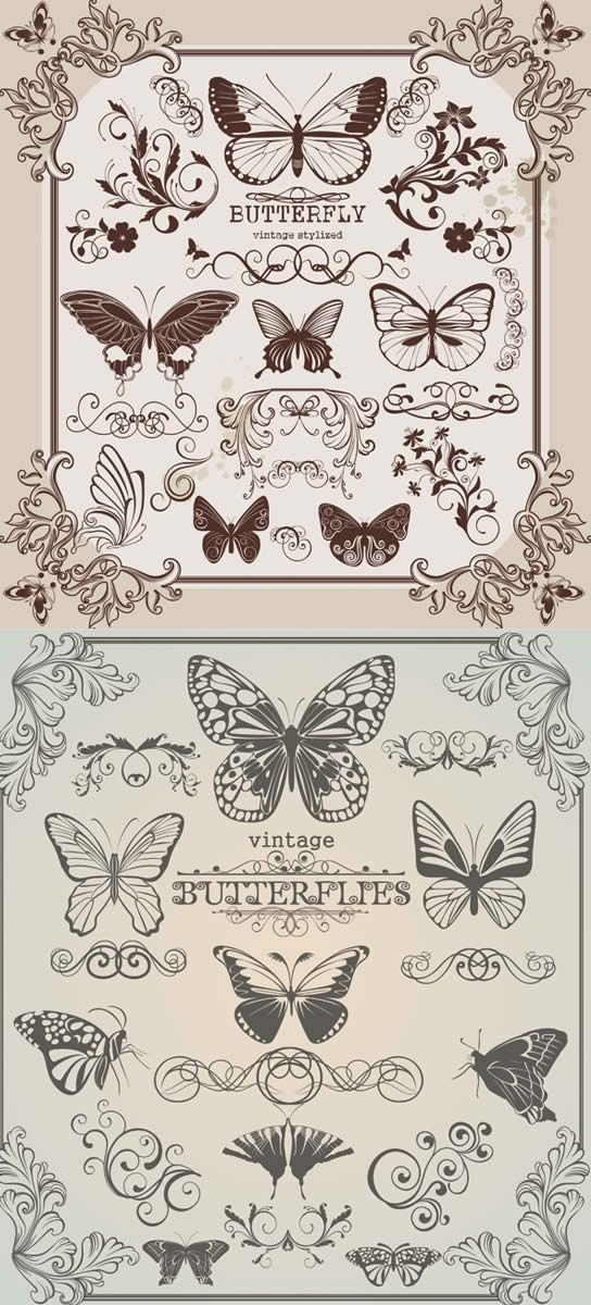 Butterfly floral Border vector