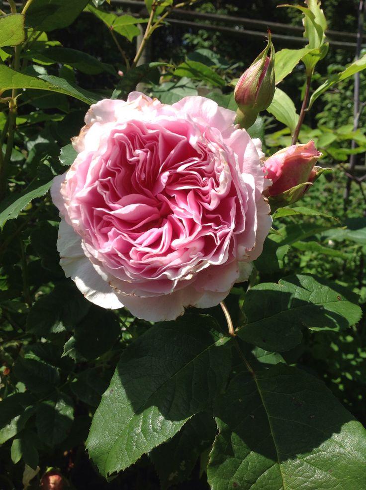 In my garden, Gartenträume