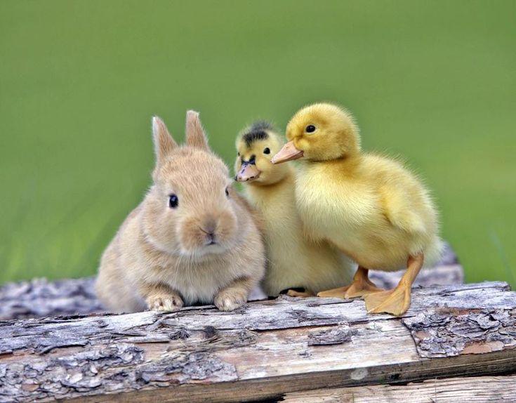 Unusual Animal Friends   Unusual Animal Friends [ Caters News Agency ]