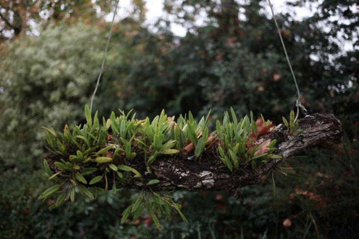 Garden Visit: A Hanging Orchid Garden in San Isidro, Buenos Aires - Gardenista