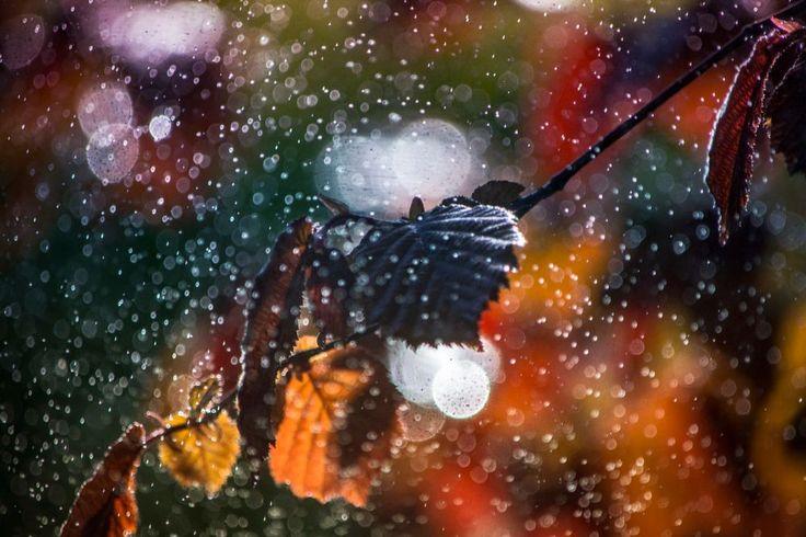 Silver rain by Nikoletta Kolozs