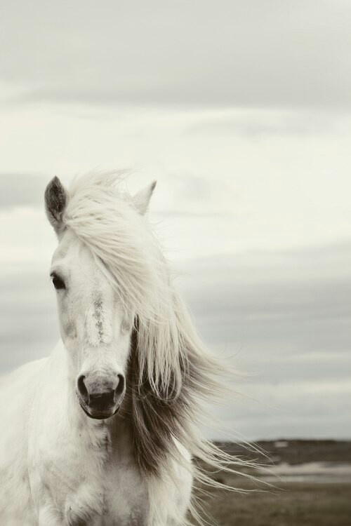 """""""Shadowfax. The Lord of all horses. He has been my friend through many dangers."""" - Gandalf the White"""