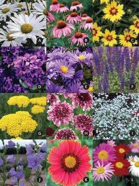 1000 images about pre planned gardens on pinterest for Preplanned flower garden designs