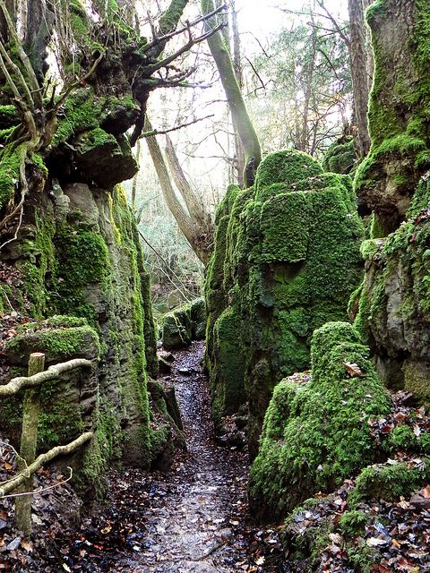 Puzzlewood, Forest of Dean, Gloucestershire, England.  Image by Nic Trott