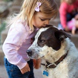 Hund ausführen statt eigenes Haustier