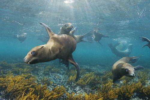 Channel Islands National Park   Channel Islands National Park: A Utopia for Exploration   GrindTV.com