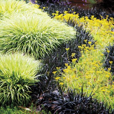Western Garden Ideas find this pin and more on garden ideas 24 Great Ideas From The Western Garden Book Of Landscaping