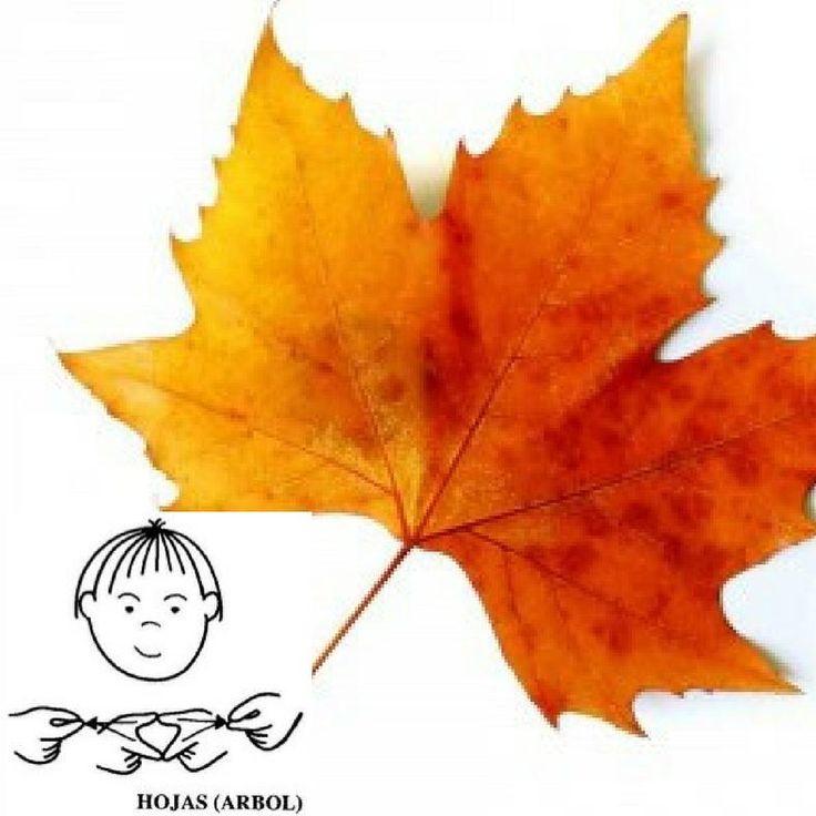 Ya tenéis el nuevo signo de hoy 3de Noviembre yupiiiiii. ¿Cuantas manualidades otoñales habéis hecho con las hojas de los árboles?  Pues ahora cuando hagáis alguna con los peques ya tenéis una buena excusa para practicar el supersigno de hoy y enseñarlo de forma natural y divertida.  Un besote cucufan
