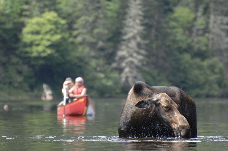 10 endroits pour observer les #animaux au #Québec #vacances
