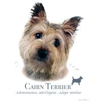 Cairn Terrier T Shirt by Howard Robinson: Available in several types of T shirts and sweatshirts,… #PetProducts #PetGifts #AnimalJewelry