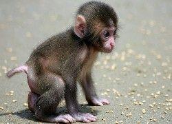 Malutka, Małpka