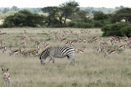 Wonderful wildlife around Meno a Kwena Camp  (Makgadikgadi Pans, Botswana). Looks like a place you wanna go? Just let us know: info@gondwanatoursandsafaris.com