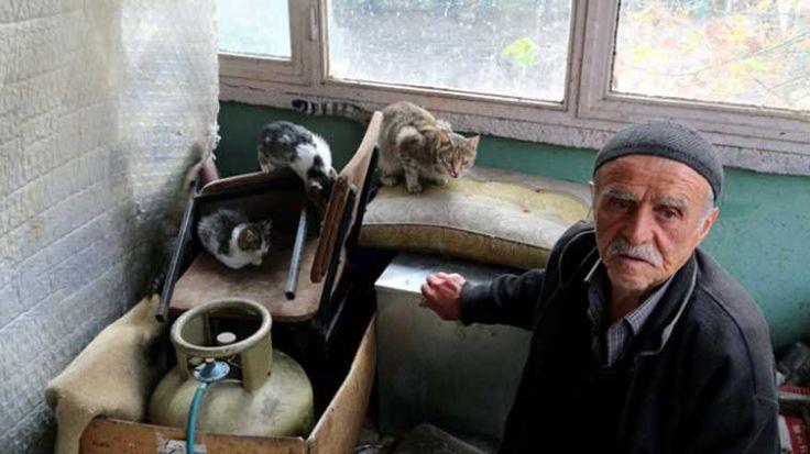 Sivas'ta dernek başkanlığını yaptığı caminin bahçe ve müştemilatında onlarca sokak kedisi besleyen 73 yaşındaki İsmet Tipiler, hayvan sevgisiyle örnek oluyor Detaylar ajanimo.com'da.. #ajanimo #ajanbrian #hayvan #animal