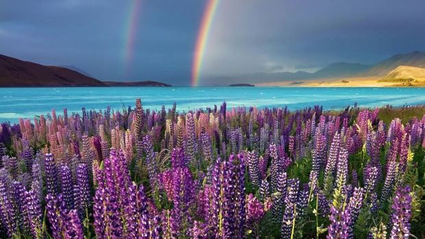 Picture perfect: Lake Tekapo tops South Island Instagram locations! #nz #laketekapo #instagram #photos #scenic #JustNewZealand