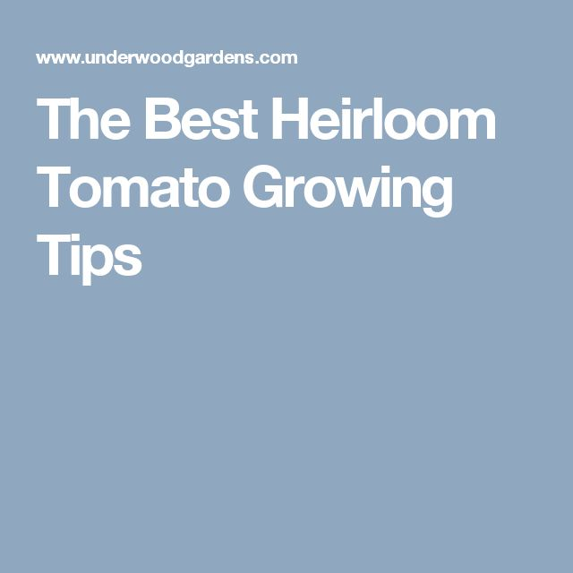 The Best Heirloom Tomato Growing Tips