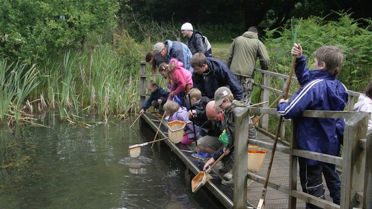 RSPB Minsmere as featured on BBC Springwatch. Pond-dipping.