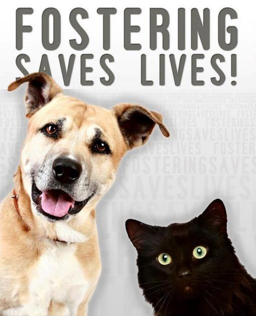 how to become a foster home for animals