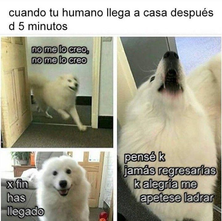 Ese momento de felicidad de nuestros amigos los perros
