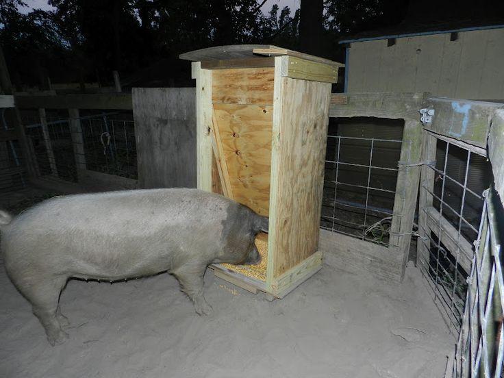 Hog Feeder Lights