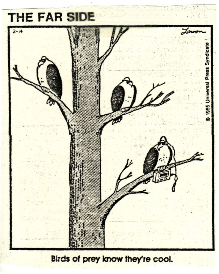 acab2640ac5e9c68593f981bb62881e2--birds-