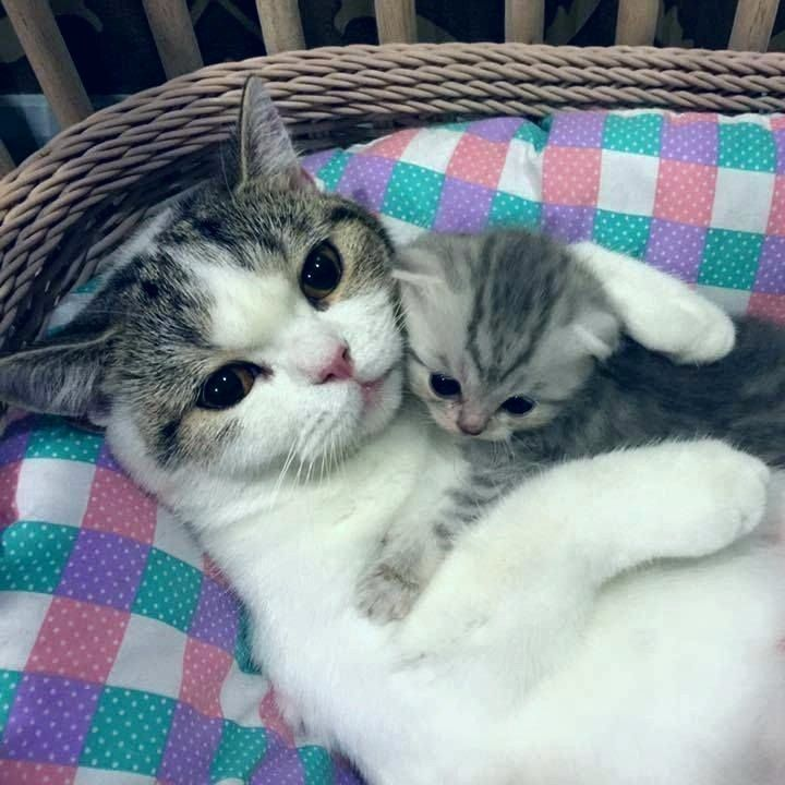 Mother Cat And Kitten Cat Cats Kitten Kittens Cute Cute