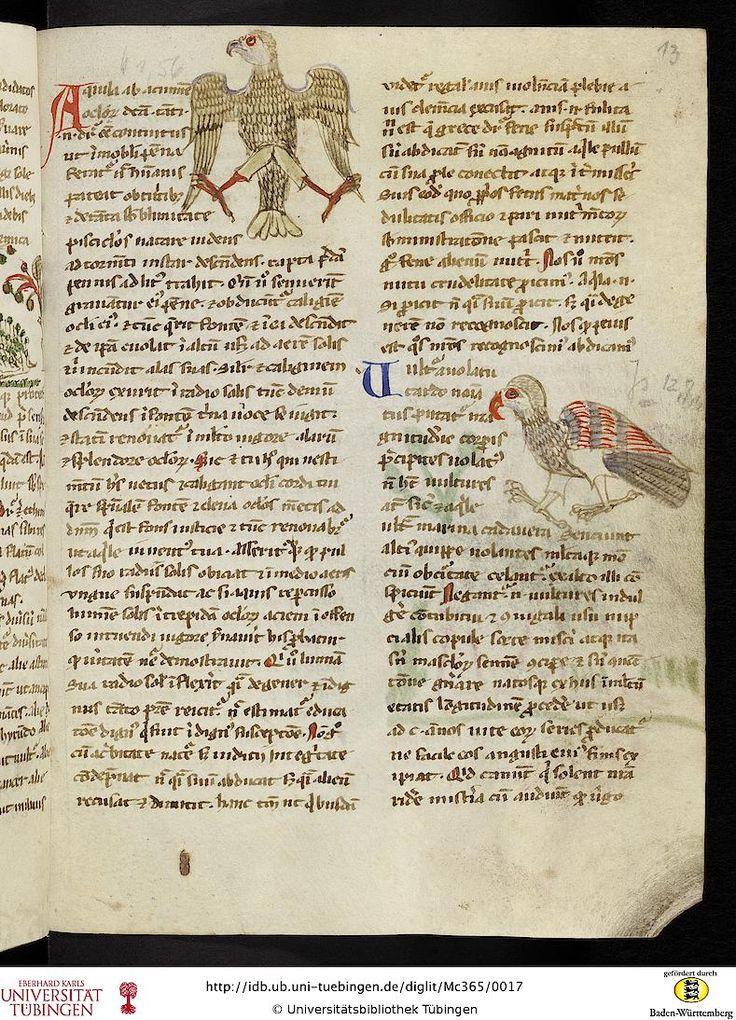 Mc 365: Mc 365 Hugo de Sancto Victore: Ps.-Hugo de Sancto Victore Bestiarium (Fragment) (Provence oder Norditalien, 13. Jh.)