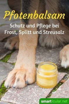Nursing and protective paw balm for dogs make themselves