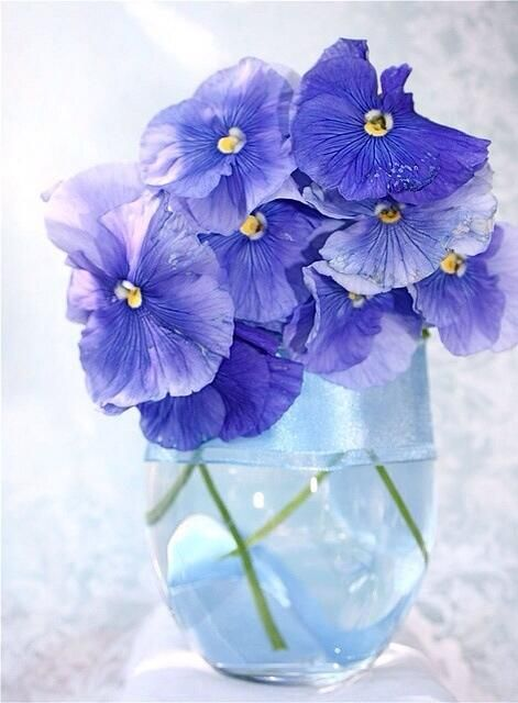 ♥♥♥: Purple, Pansies Violas, Blue Pansies, Fifi Girl Photos, Beautiful Flowers, Fresh Flower, Pansies Blue, Blue Flower