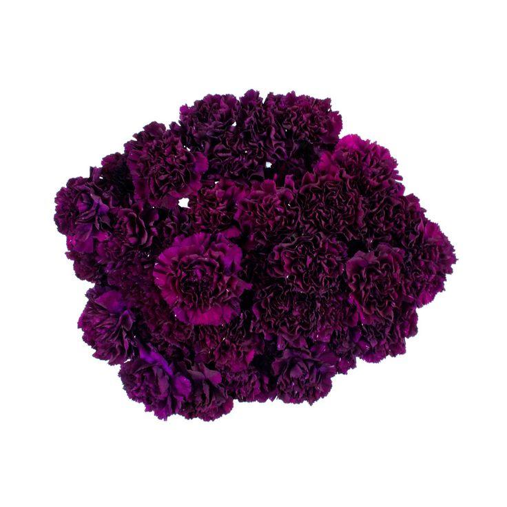 "Sam S Club Wedding Flowers: ""Florigene"" Moonvista Carnations - 140 Stems"