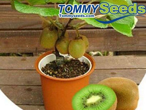 25 trending bonsai fruit tree ideas on pinterest bonsai