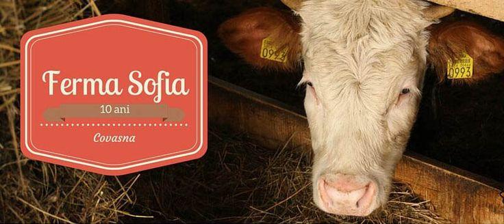 Ferma Sofia: Carne, Ouă şi Lactate din Covasna http://platferma.ro/ferma-sofia-carne-oua-lactate-covasna/