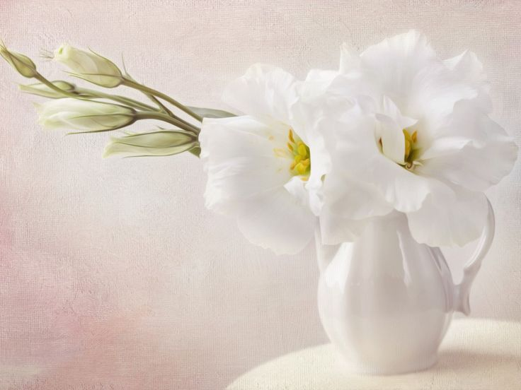 Beautiful White Flowers In A Vase