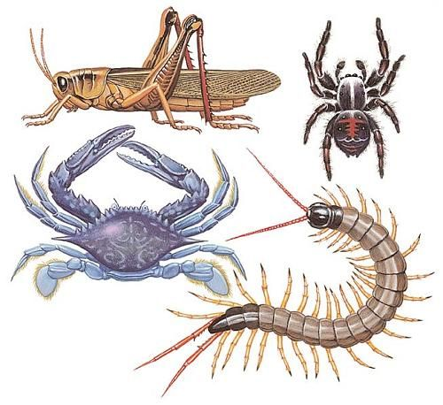 Ms de 25 ideas increbles sobre Animales invertebrados en