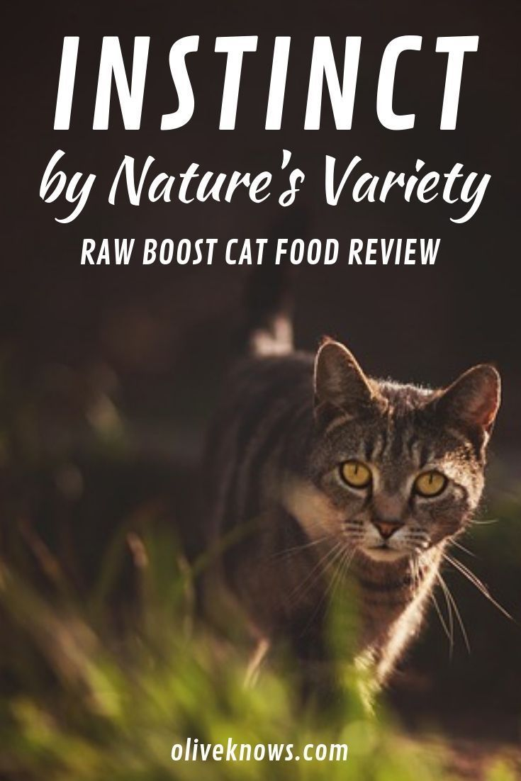 Instinct By Nature S Variety Raw Boost Cat Food Review Oliveknows Cat Food Reviews Cat Food Instinct Cat Food