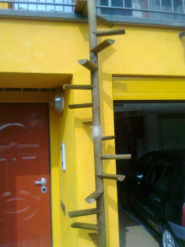 Best 127 Best Images About Crazy Cat Ladders On Pinterest 640 x 480