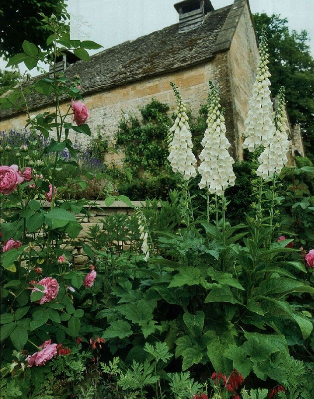 White foxgloves and pink cabbage roses ... can't get much better than that!