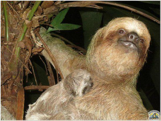 Ecocentro Danaus (La Fortuna de San Carlos, Costa Rica): Top Tips Before You Go (with Photos) - TripAdvisor