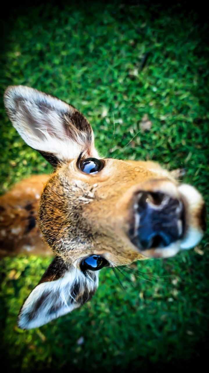 """"""" I see you up there in that Deer Watch   woodpile. Too bad yer gonna fall out and   break yer leg."""""""