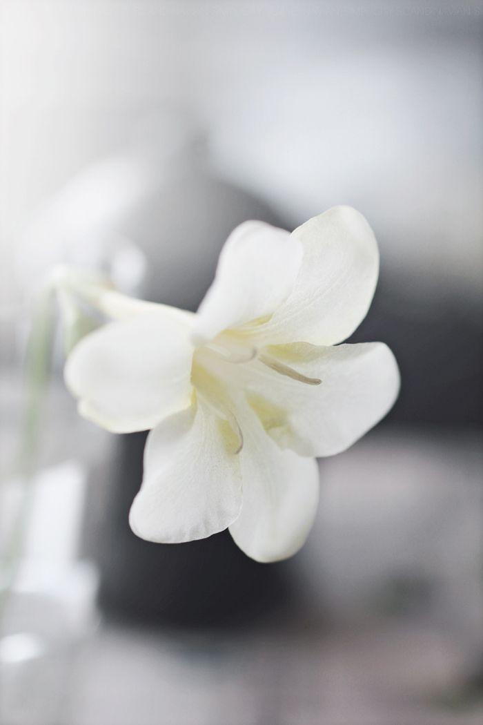 Mejores 179 imgenes de Flores Blancas en Pinterest Flores blancas