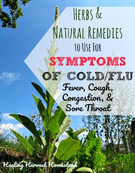 How to Make Horrible Sore Throats, Debilitating Fevers, and Other Cold & Flu Symptoms Feel Better Naturally (What Herbs are Best to Use for Sore Throat, Fever, Coughs & Congestion?)  https://www.healingharvesthomestead.com/home/2017/11/12/how-to-make-horrible-sore-throats-debilitating-fevers-and-other-cold-flu-symptoms-feel-better-naturally-what-herbs-are-best-to-use-for-sore-throat-fever-more  Heidi Villegas