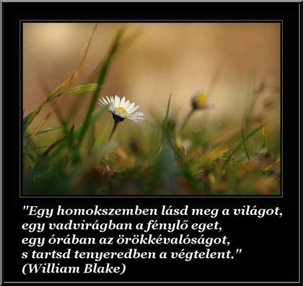 Részlet William Blake Az ártatlanság jövendölései c. verséből. A kép forrása: A szeretet és béke szigete # Facebook
